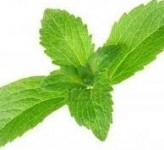 GLG Life Tech unveils new stevia variety with higher natural Reb A content