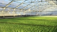 Hydroponic growing systems use significantly less water, claims Suncrest USA
