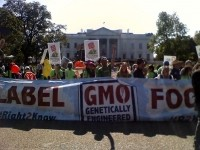 GMO labeling battle heats up in Washington State