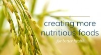 Novel fermentation process will unlock rice bran protein potential, says Nutraceutical Innovations