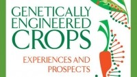 NAS GM crops report explores pros and cons of GMOs
