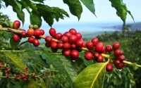 KonaRed tells a sustainability story:  The active ingredient is extracted from coffee fruit harvested on the Kona Coast of Hawaii's Big Island.  The fruit pulp was discarded at one time during coffee manufacture.