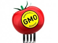 Rep. Pompeo's bill specifically prohibits mandatory labeling of foods developed using bioengineering, giving sole authority to the FDA to require mandatory labeling on such foods if they are ever found to be unsafe.