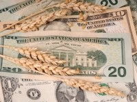 Wheat, corn price spikes set for Q1 2013, says Rabobank