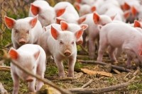 Animal welfare movement 'parallels' the opportunities and challenges of the organic movement