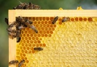 Industry disagreement could delay a national honey standard