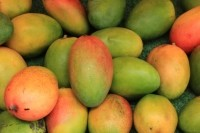 Senegal is ready to supply US mangoes